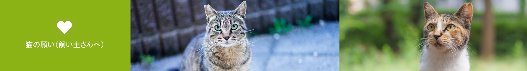 猫の願い(飼い主さんへ)